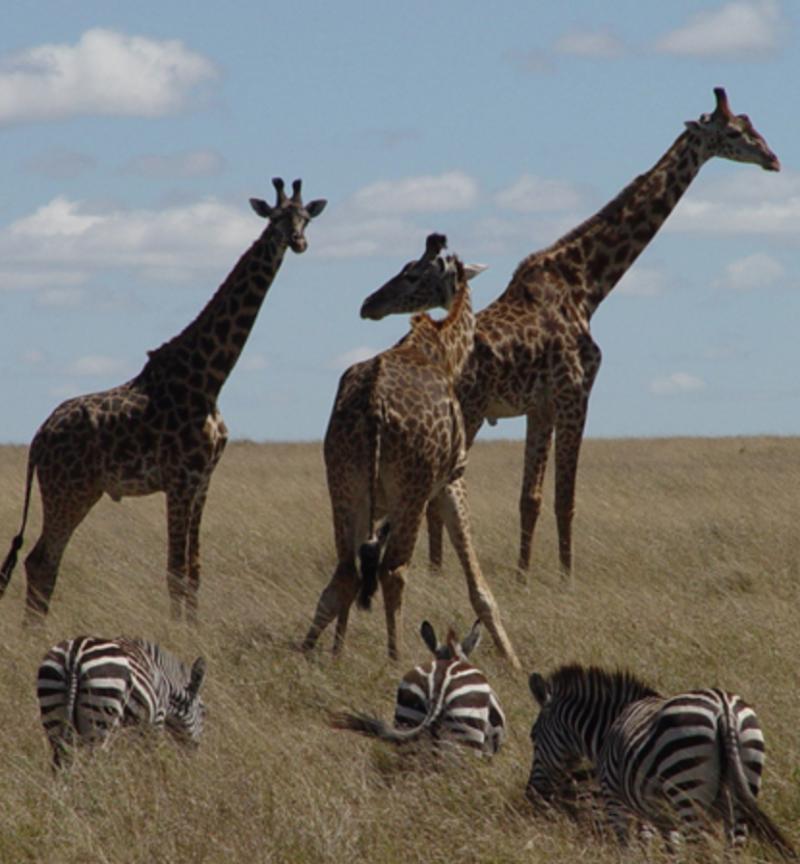 African Safari Adventure | Naughty Travel Guide